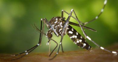 Infos & conseils à partager pour lutter contre le moustique tigre