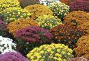 Vente de fleurs : Mr Norre